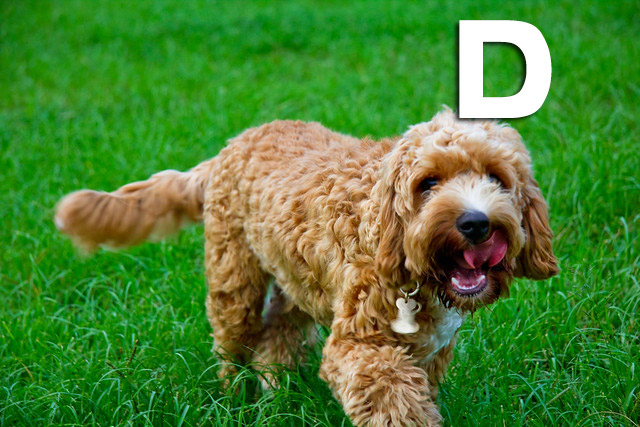 Girl And Boy Dog Names That Start With Letter D